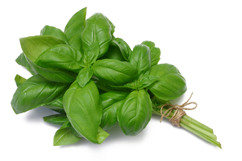 basil bsp Whats so healthy about basil?
