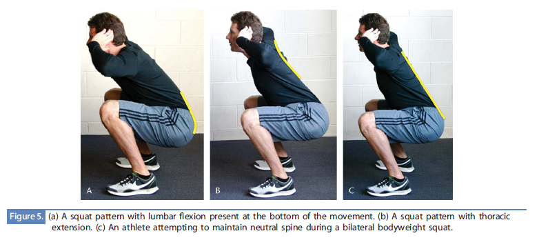 flexion extension and neutral spine All About The Squat