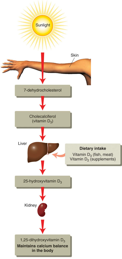 relationship between high cholesterol and liver function