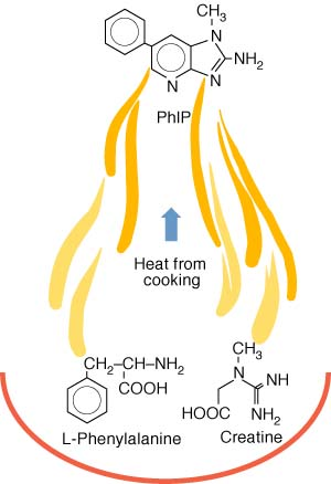 How heat from cooking forms HCA compounds