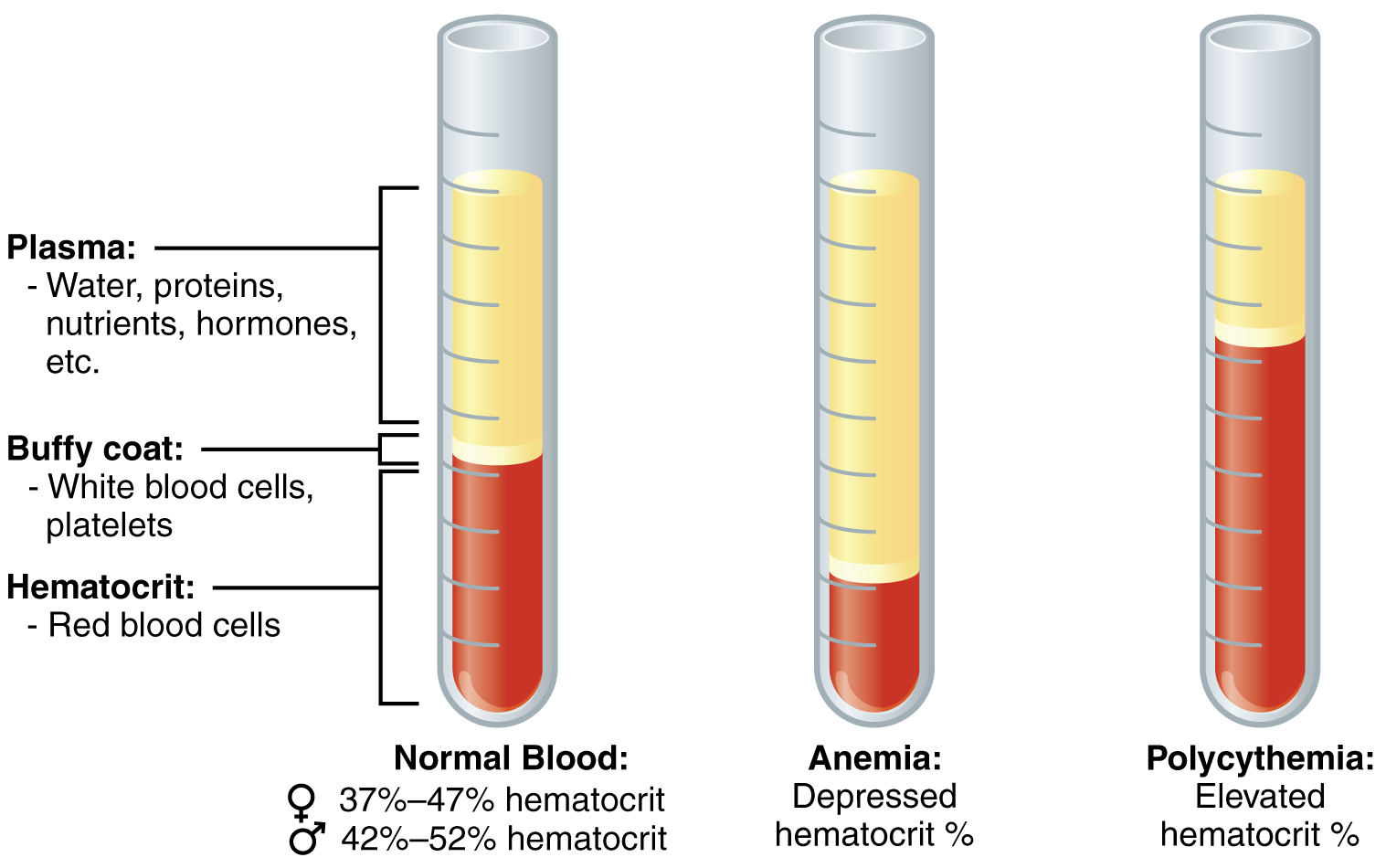 Blood Tests and Lab Analysis