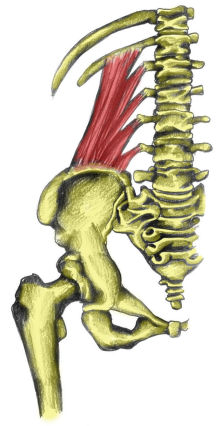 quadratus_lumborum220