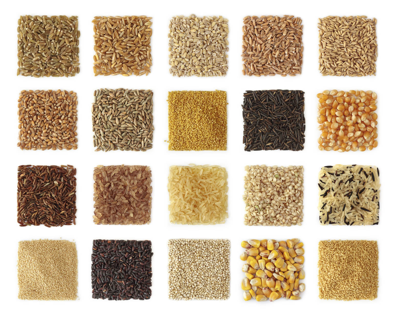 Settling the great grain debate  Can wheat and other grains
