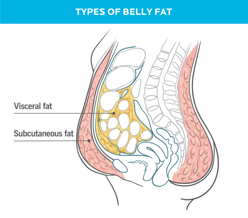 This illustration shows the two types of fat that reside in the belly region. Subcutaneous fat is close to the surface, and is the kind you can pinch. Visceral fat is deeper, and surrounds your organs.